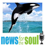 News for the Soul Killer whale learns how to mimic human speech image